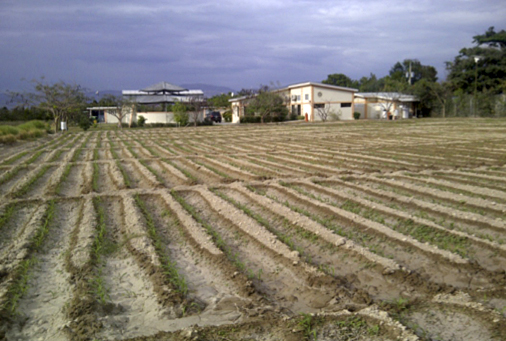 A new approach to planting maize seedlings developed at the CRDD is pictured here, the Center is visible in the background.